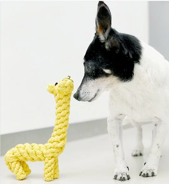 dog with toy